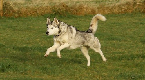 Dog Training Amp Behaviour The Good Dog Guide 39 S Blog