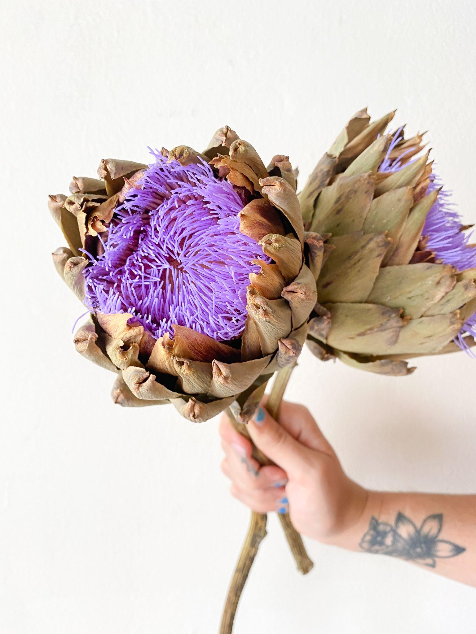 Purple Blooming Artichoke Flower in 2020 Artichoke