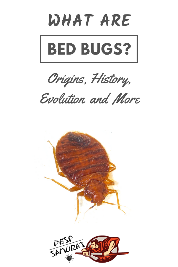 What Eats Bed Bugs
