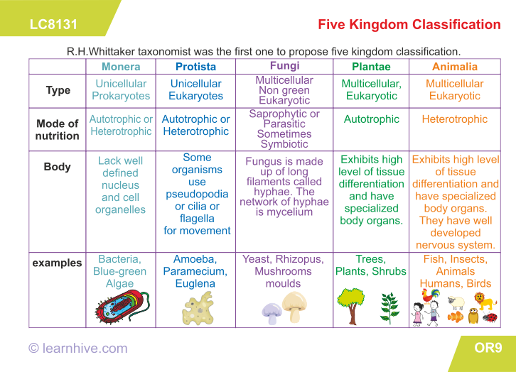 learning card for Five Kingdom Classification – Classification Worksheet Biology