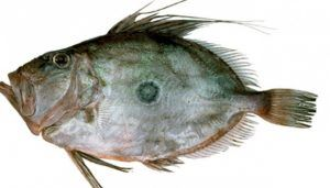 Manfaat Ikan Dori Untuk Diet Yang Enak Dan Menyehatkan Ikan Gambar Resep Ikan