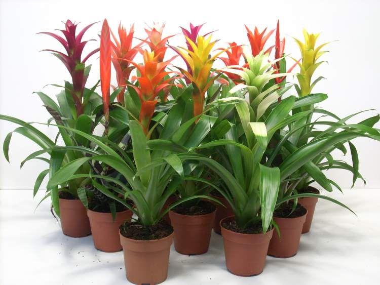 24 plantas perfeitas para decorar o interior da sua casa - Variedades de plantas de interior ...