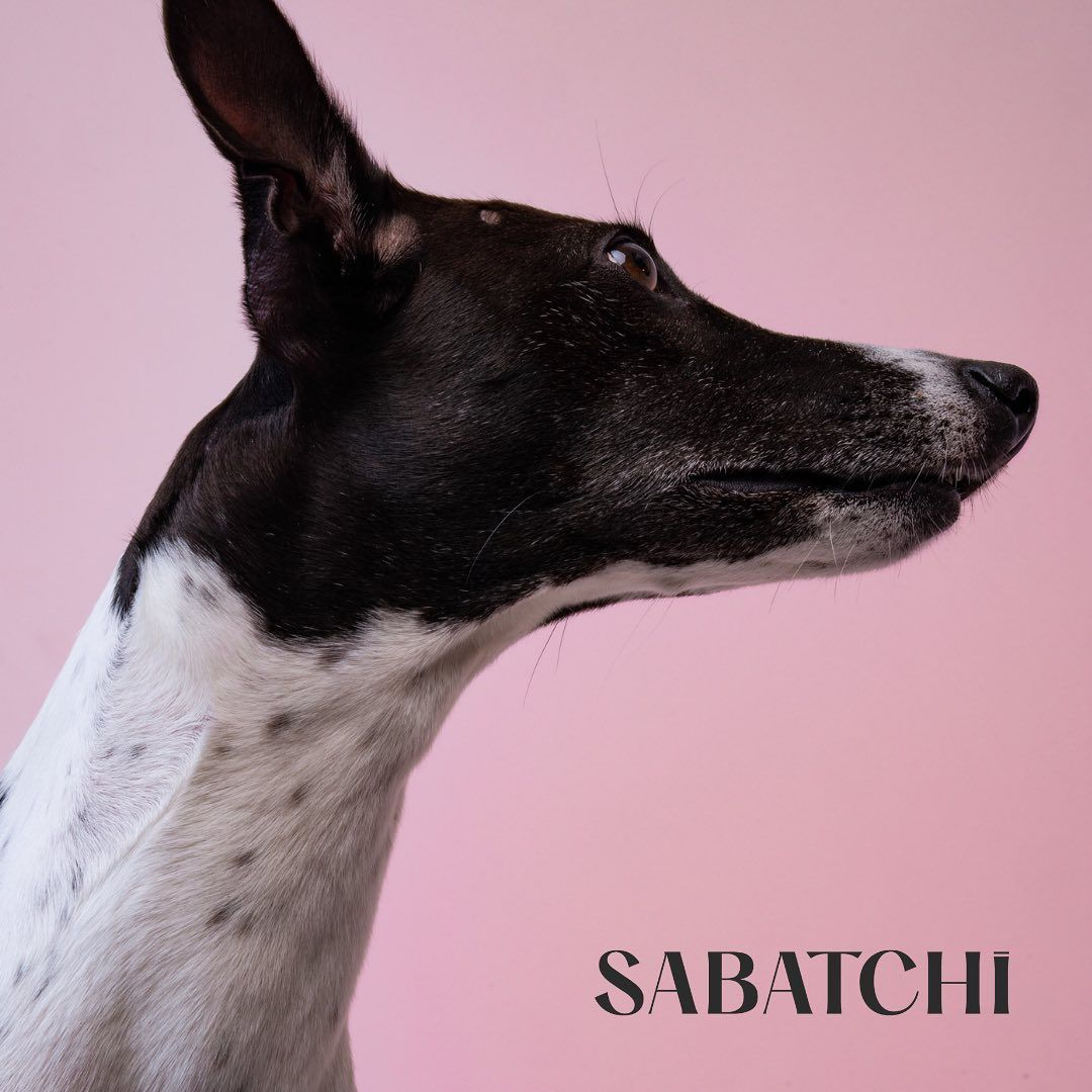 "𝗦𝗔𝗕𝗔𝗧𝗖𝗛𝗜 on Instagram: ""Coming this winter. #sabatchi #sabatchiberlin #dogs #dogstagram #dogsofinstagram #dogsofinsta #design #moderndesign #pets #petstragram…"""