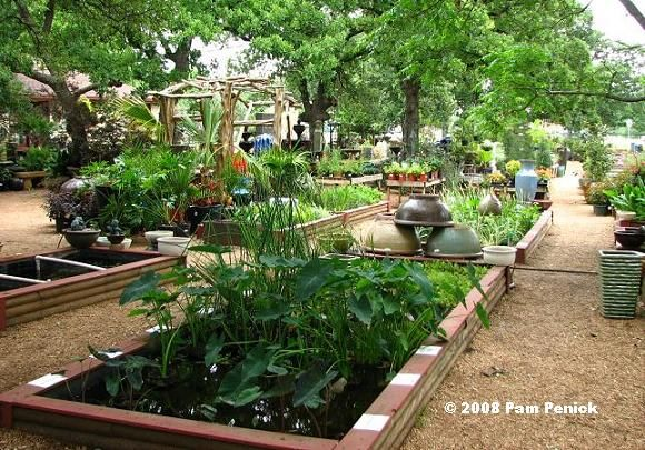 pond! Hill Country Water Gardens in Cedar Park (a suburb north of ...