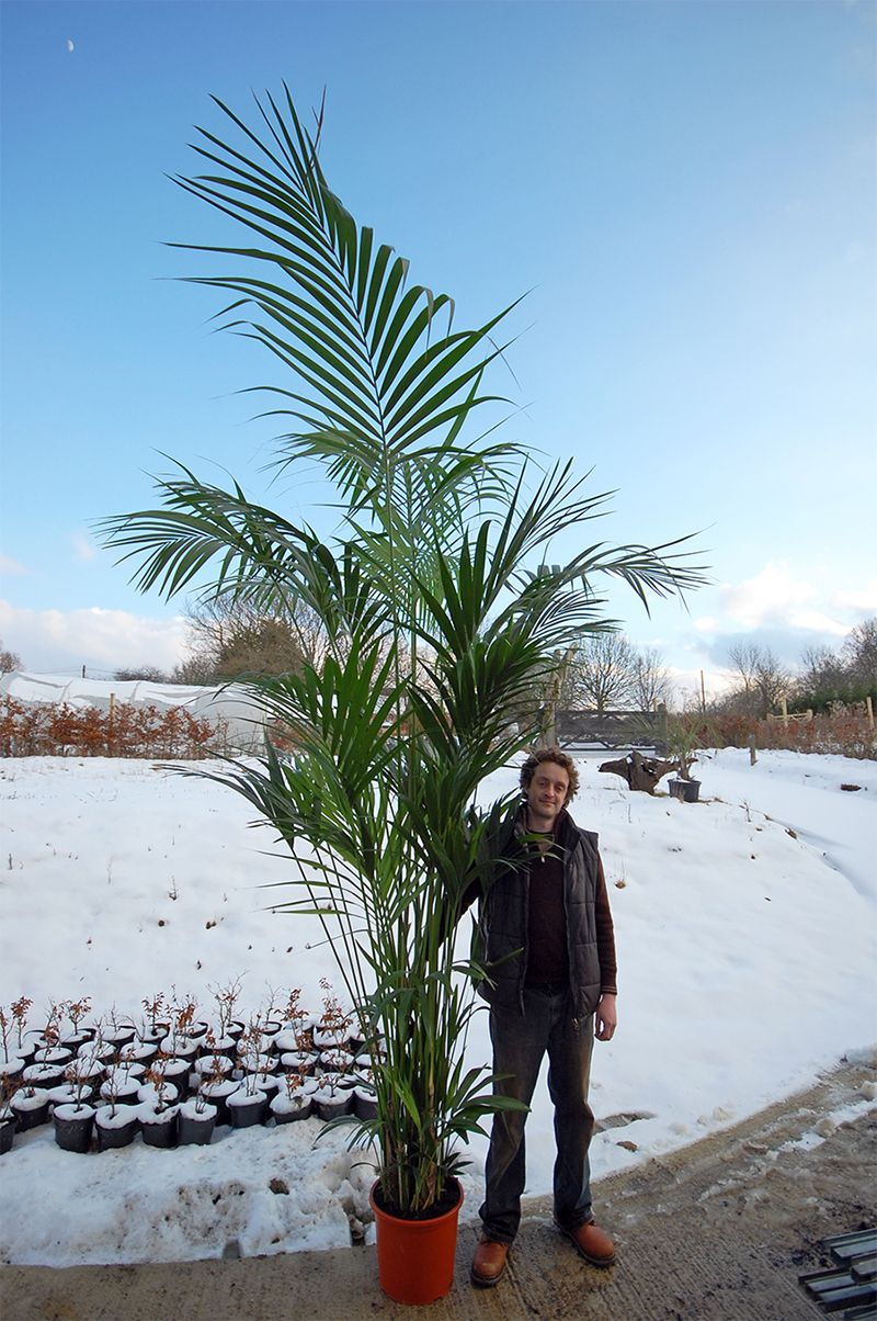 a new big plant for my house.. maybe not THIS big.. and man included?! maybe!