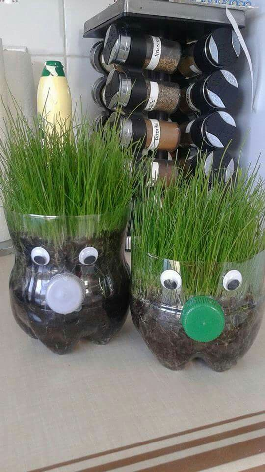 Photo of Mother's Day Gifts 2019 – Plastic Bottle Mini Herb Garden
