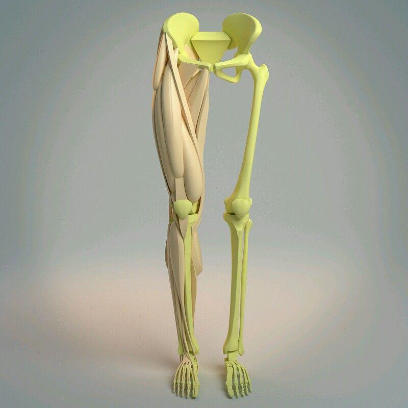 Pin de Erika G Eguia en Anatomy | Pinterest | Anatomía