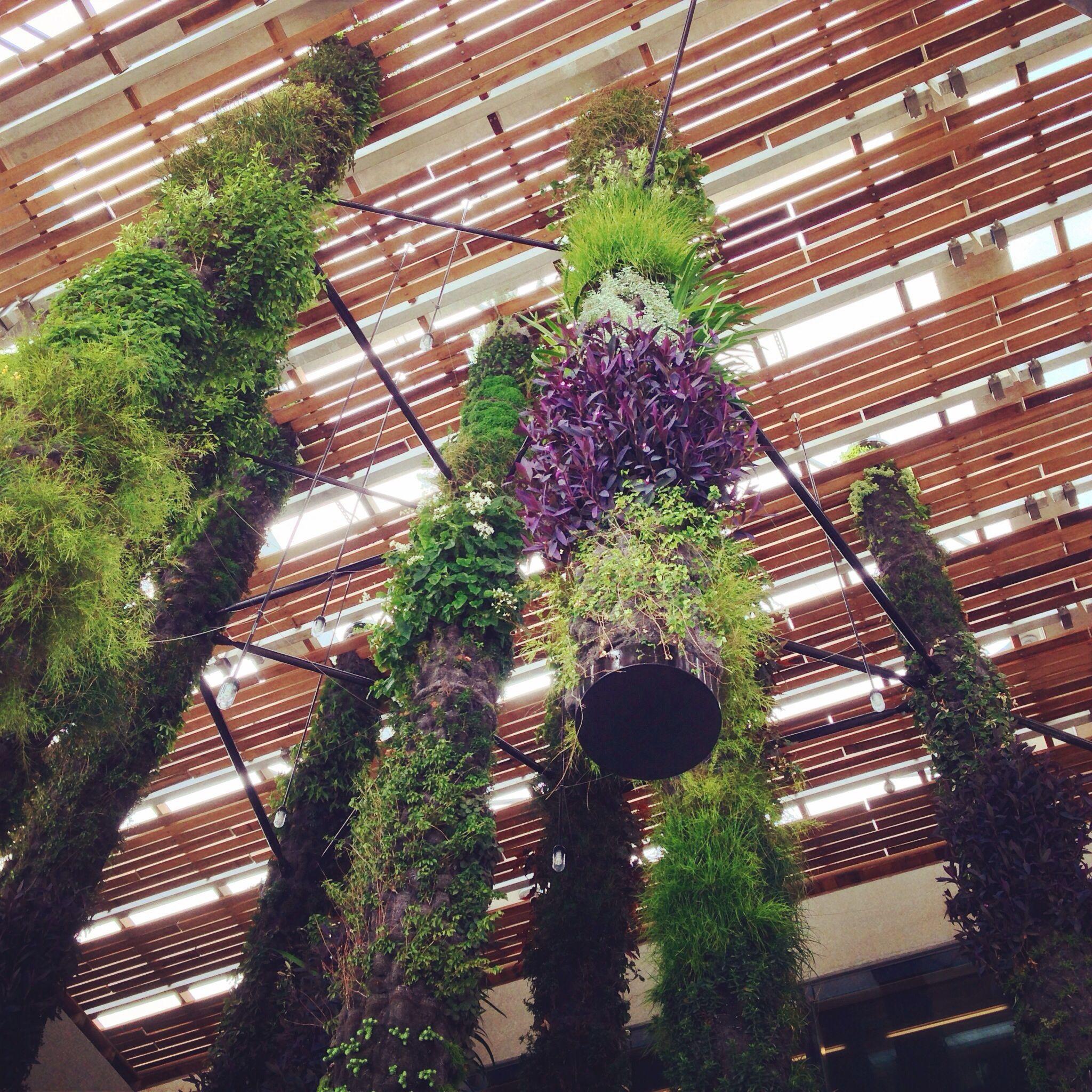 Vertical Gardens At Perez Art Museum Miami (com Imagens