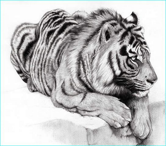 Cute tiger drawings for inspiration 16