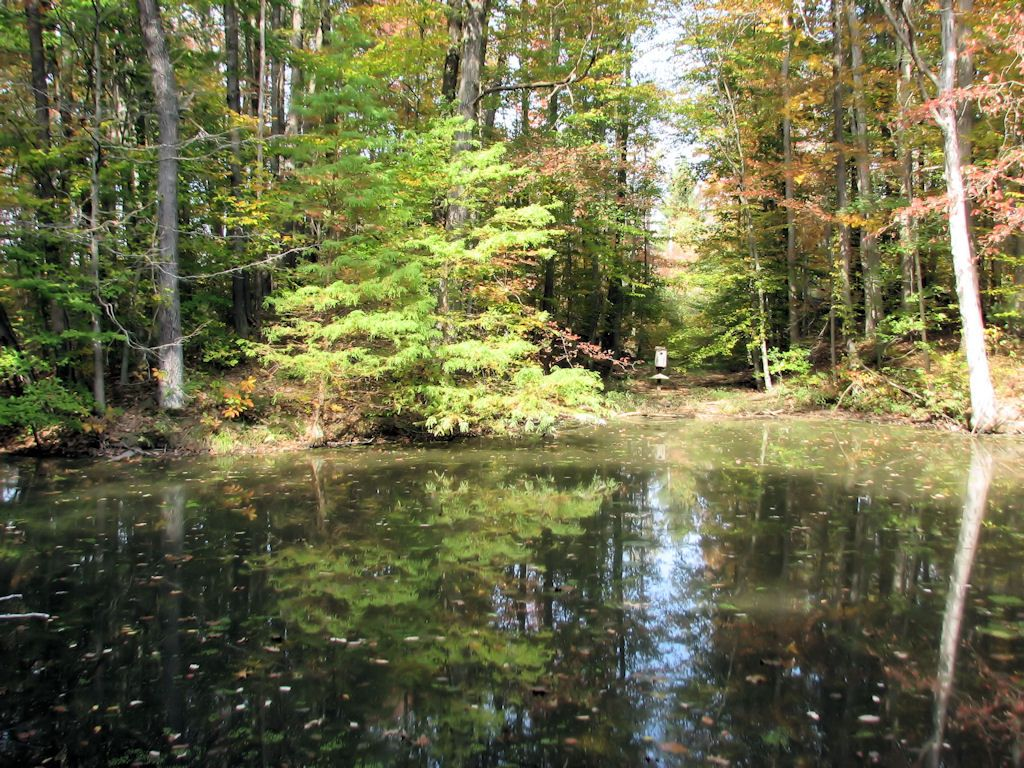Selmier State Forest, an Indiana State Forest located nearby