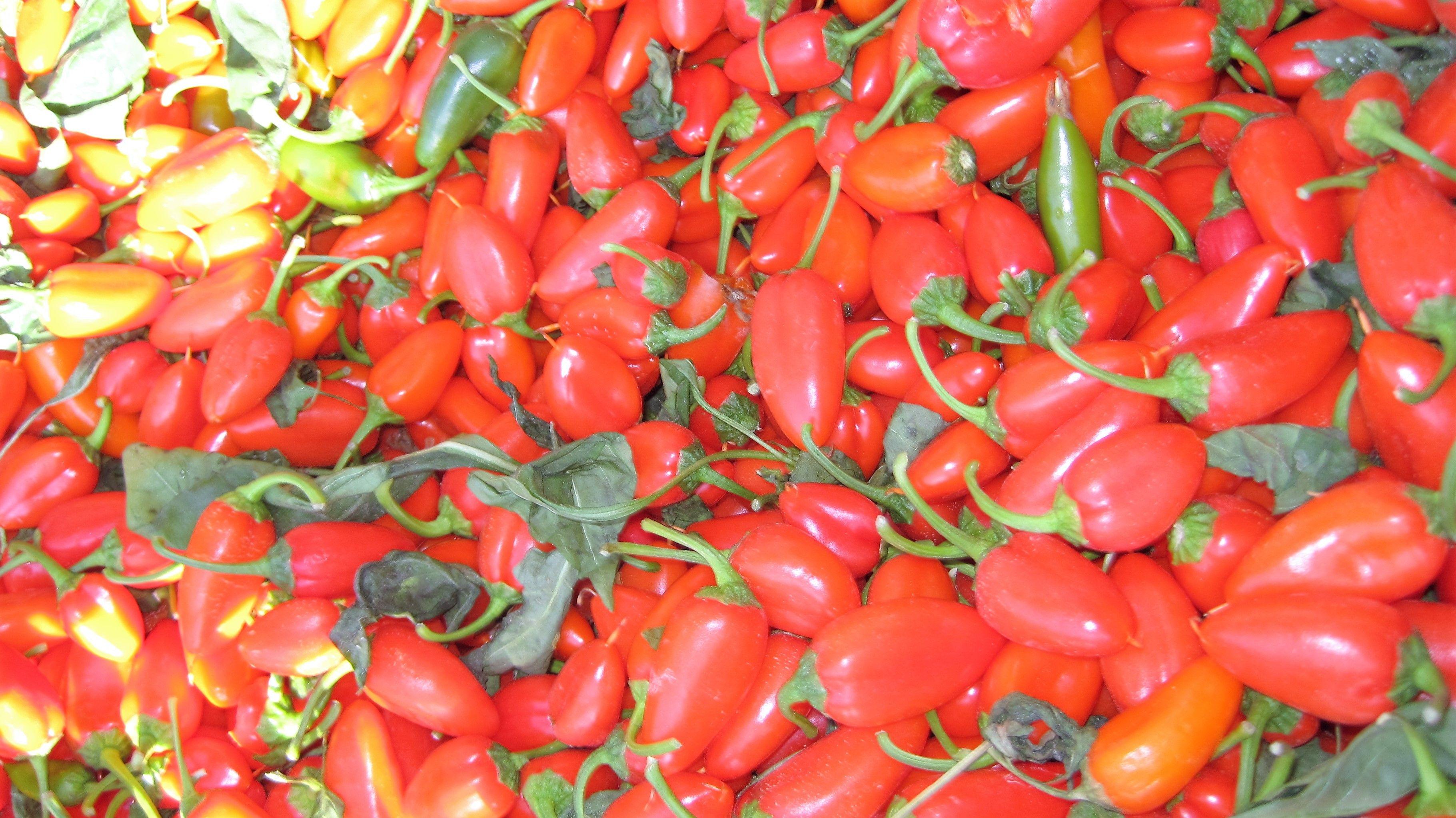 Mini paprika snacks