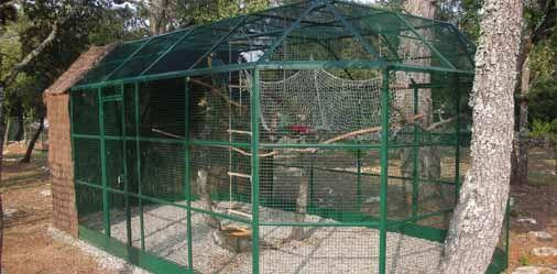Video 209 offrez une voli re ext rieure vos oiseaux for Oiseaux pour voliere exterieure