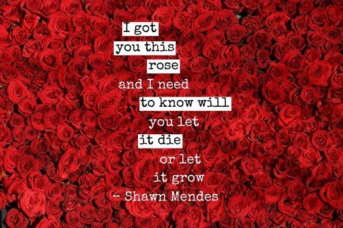 Shawn Mendes roses