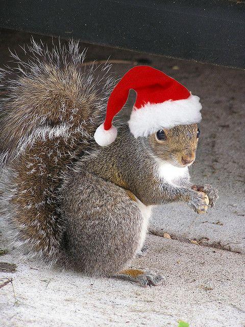santa 39 s elf ratface my christmas