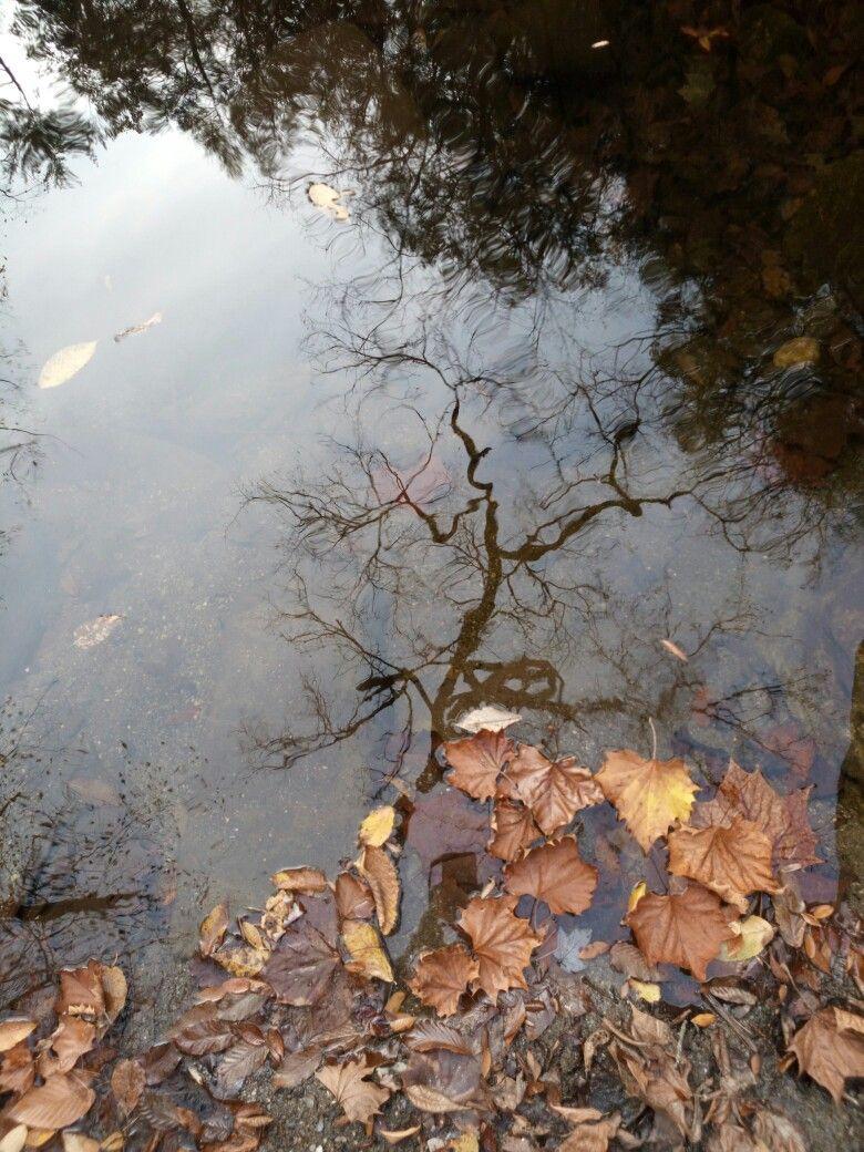 autumn reflection in mountain stream Smokey Mountains, Tennessee