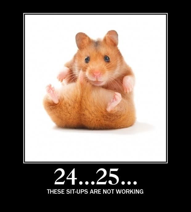 Funny Pictures Of The Day 52 Pics Funny Hamsters Bear Hamster