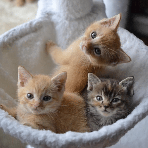 5 Things You Didn't Know About Cats Cats, Cat facts