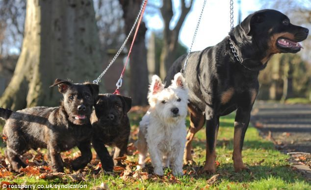 The Unlikely Romance That Produced A Litter Of Wottie Dogs