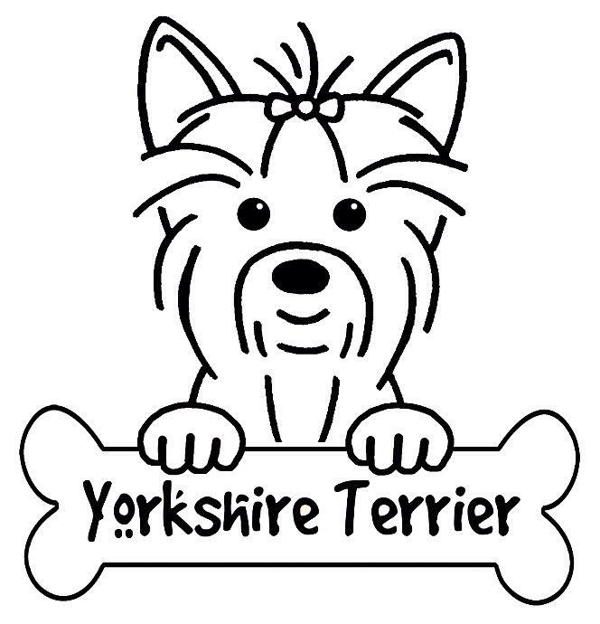 I M A Yorkie ᴸᴼvᴱᴿ Dog Drawing Yorkshire Terrier Dog Art
