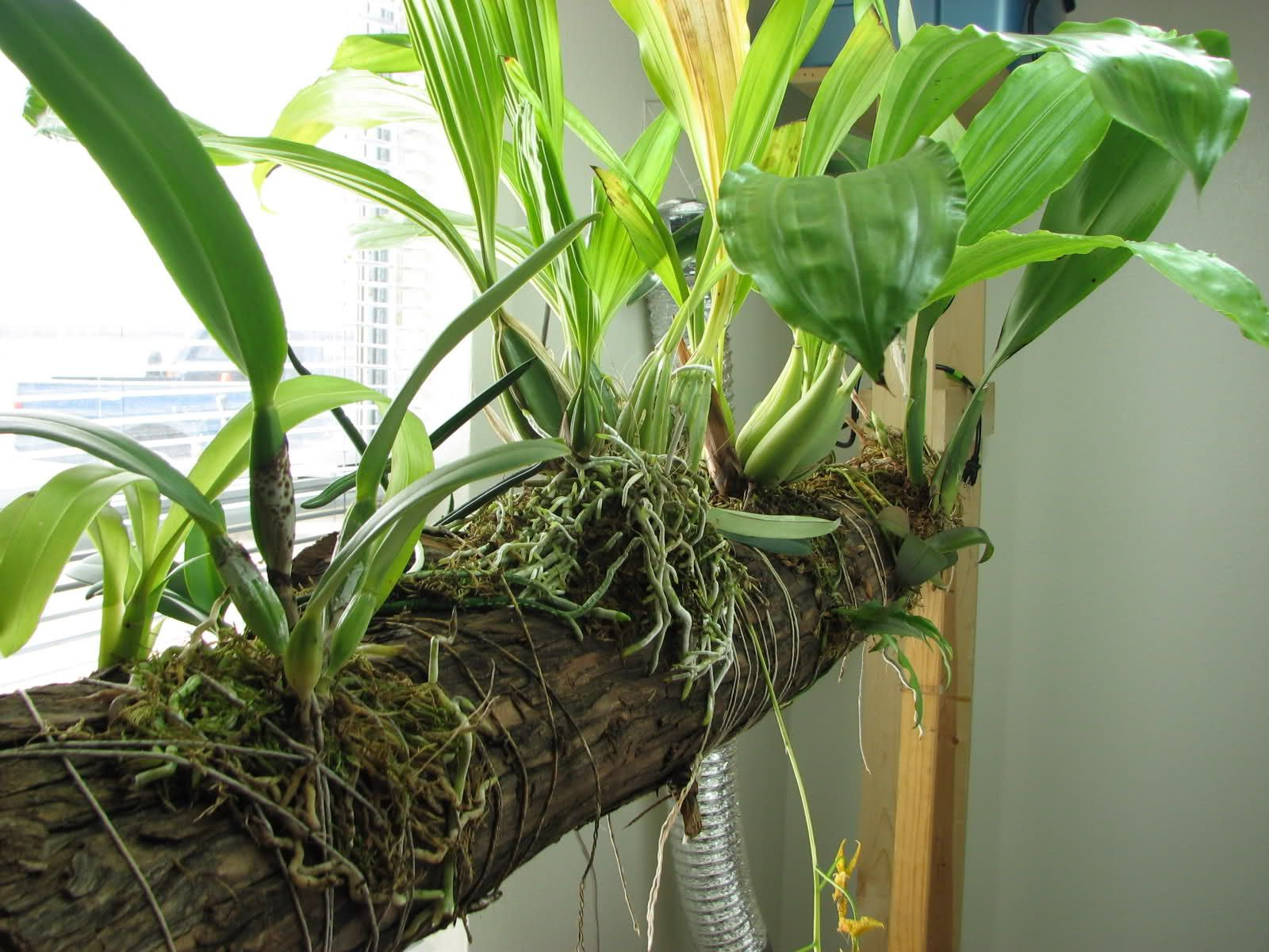 unusually mounted orchids Google Search Orchids