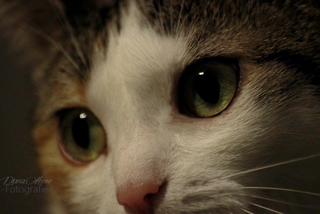 Missy's Eyes