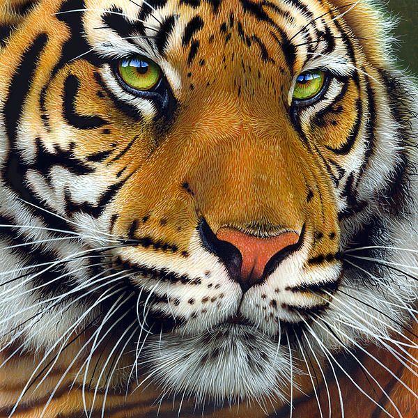 November Tiger Grosse Katzen Wilde Tiere Und Tierbilder