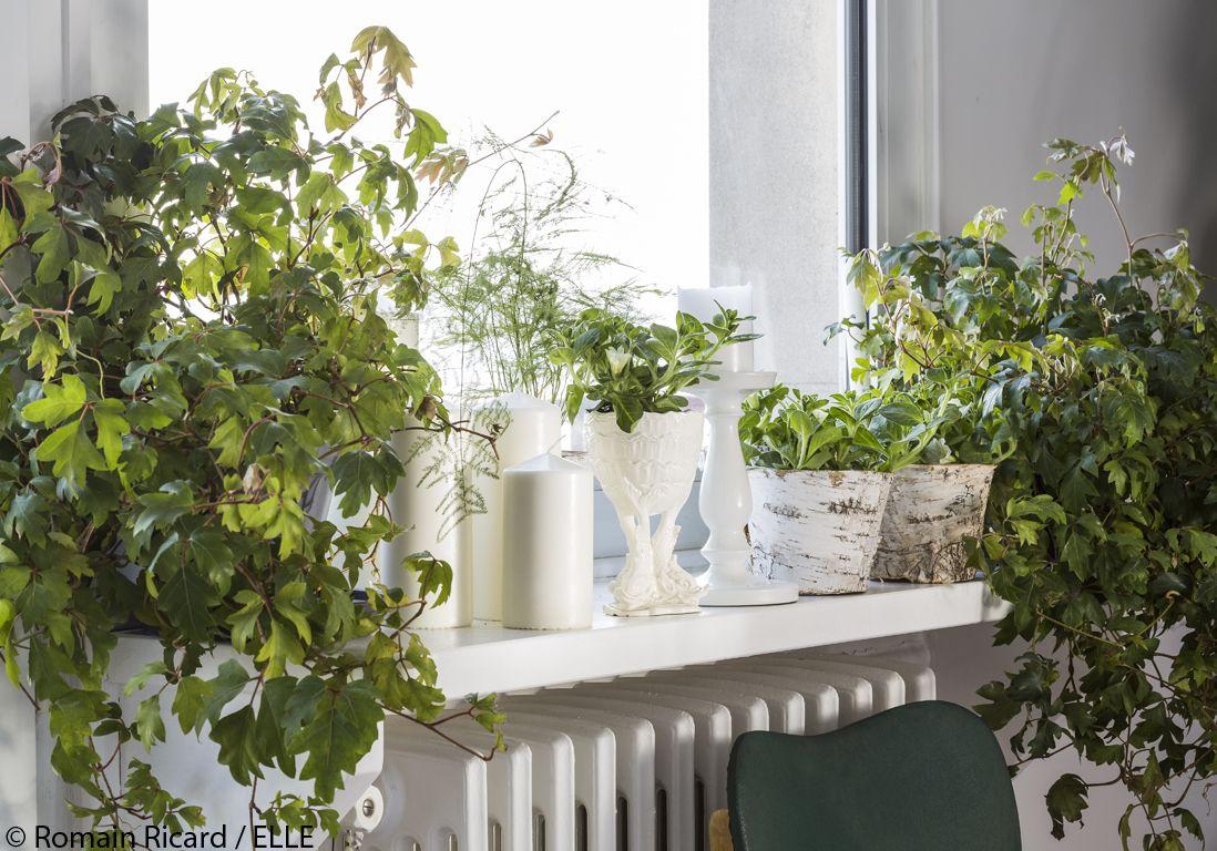 Comment jardiner du balcon au salon : les 10 commandements ...