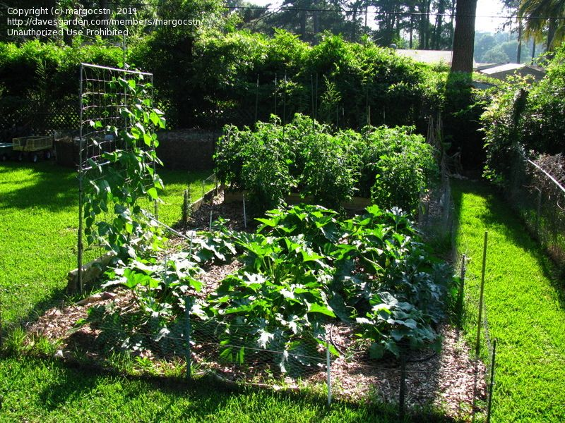 17 Best images about OUTSIDE veggie garden on Pinterest Gardens