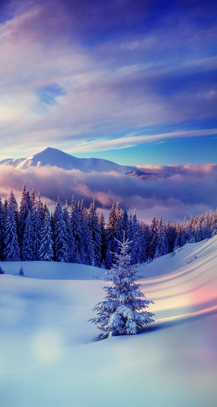 Tap And Get The Free App Landscapes Sky Winter Snow Fir Mist Northen Blue Hd Iphone 5 Wallpaper Winter Wallpaper Winter Pictures Winter Scenery