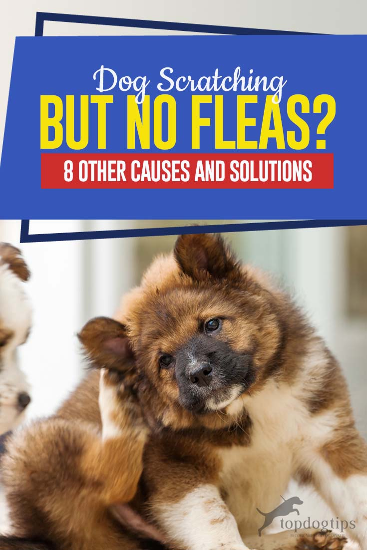 Dog Scratching But There S No Fleas 8 Other Causes Of Itching And Solutions In 2020 Demodex Treatment Dogs Fleas Dog Itching