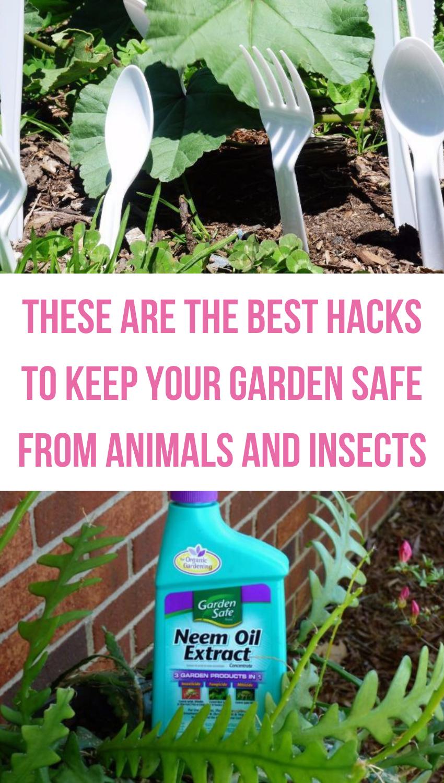 f27cc414c749efe3c3b4ba09a1991d19 - Which Plastics Are Safe For Gardening