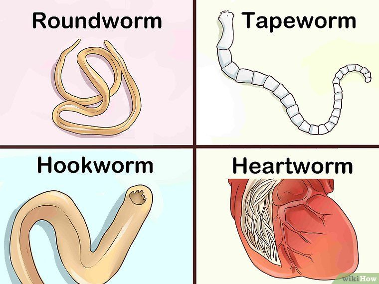 How To Identify Different Dog Worms With Pictures Worms In Dogs Different Dogs Dogs