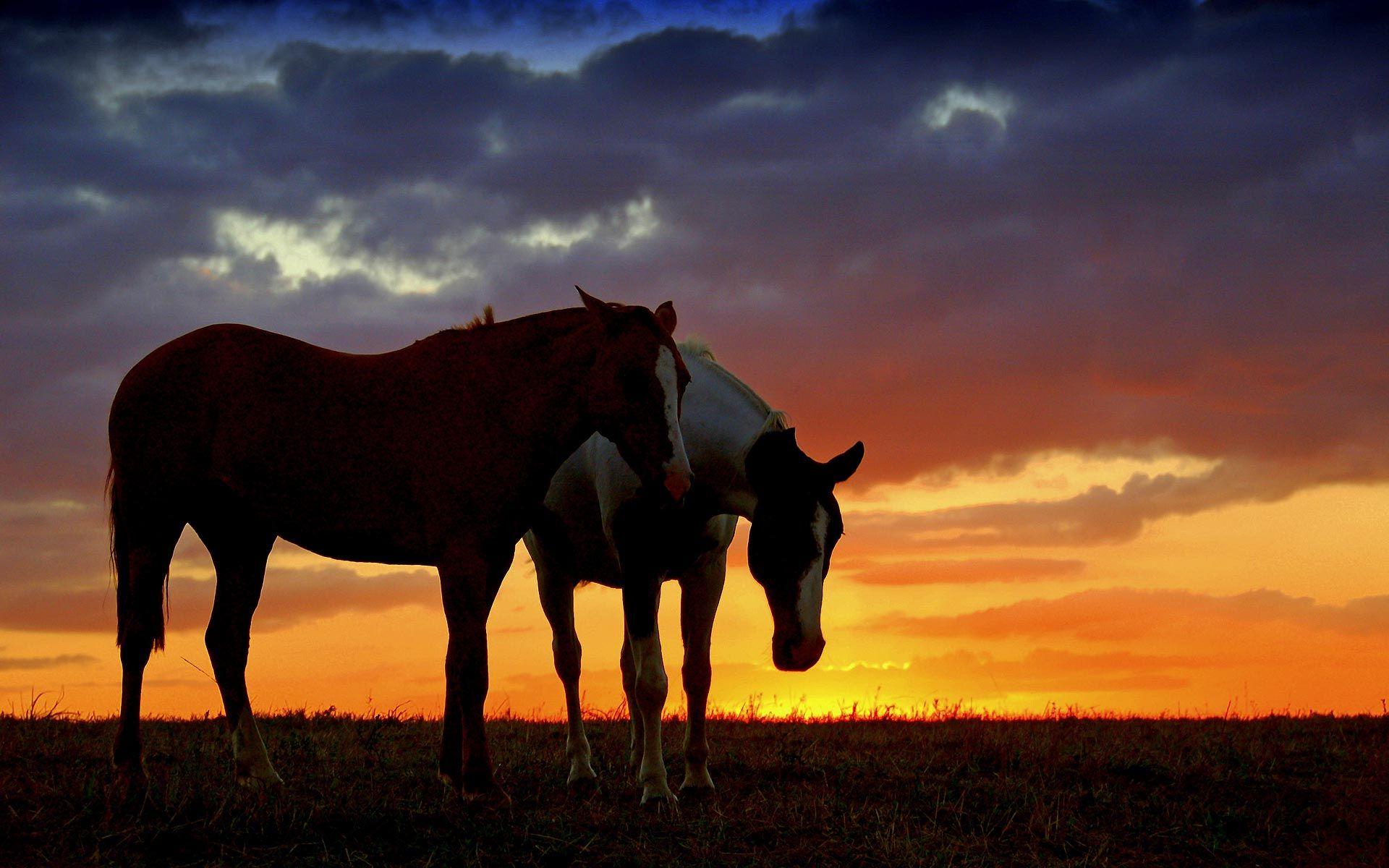Beautiful Wallpaper Horse Sunrise - f27d4b11163a2e4de454d167a49ea3f2  Pic_834065.jpg