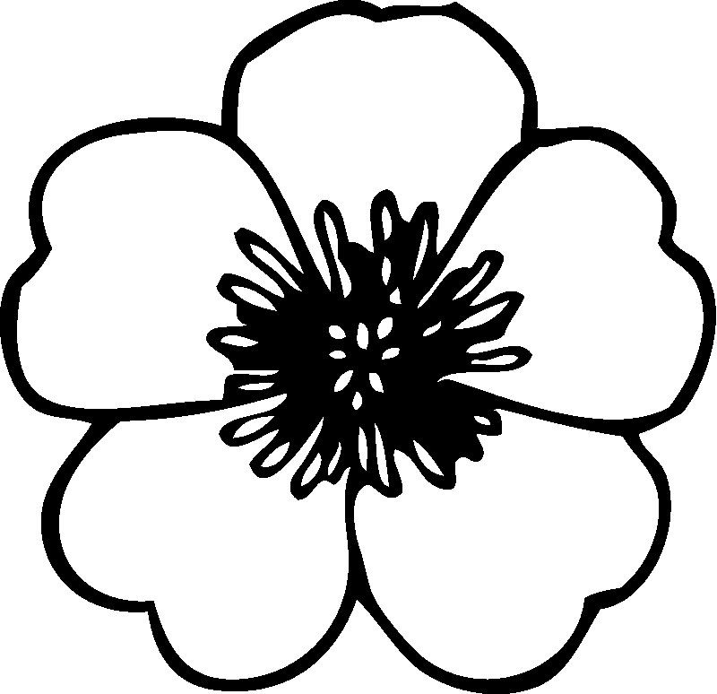 Preschool Coloring Pages Hibiscus Flower Coloring Pages Flower Outline Flower Stencil