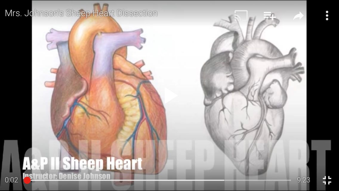 This is a video of a sheep heart direction with a quiz at the end ...