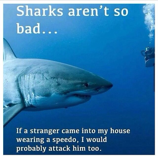 Tooooo True Sharks Funny Funny Pictures Misunderstood Shark