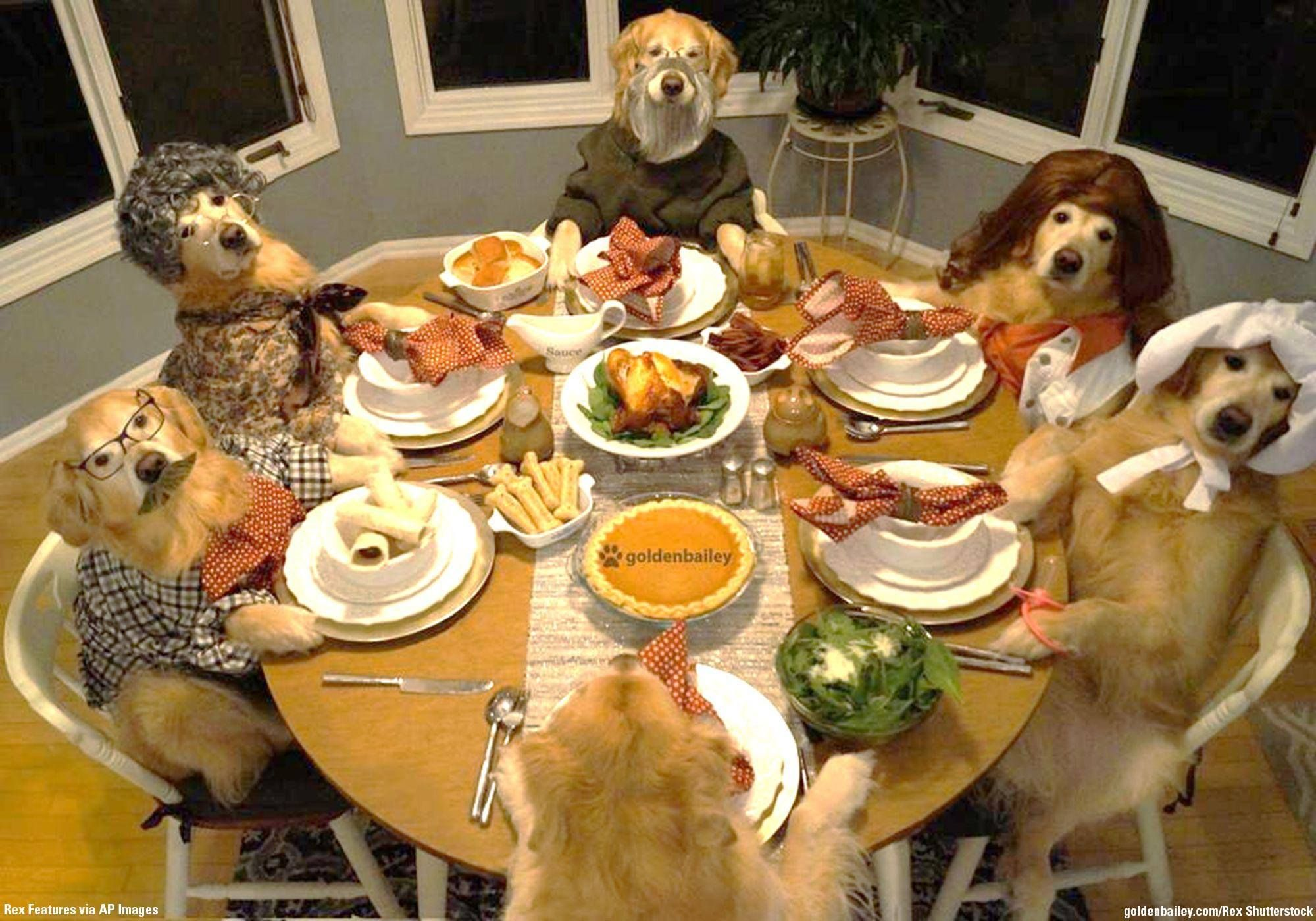 Happy Thanksgiving from Birds on the Brink! Dog