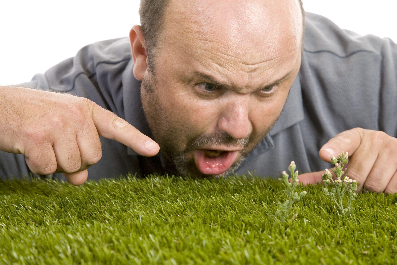 Frustratingweedslargeg lawn care pinterest