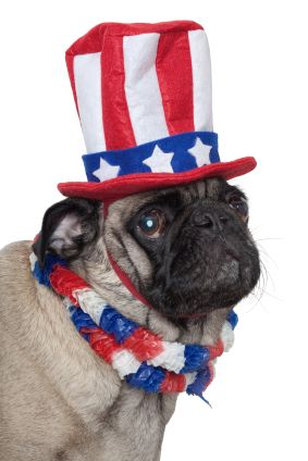 Hail To The Dog When Asked Which Would Make A Better President