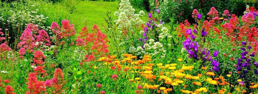 A healthy garden is a happy garden | Landscape Beautiful | Pinterest ...