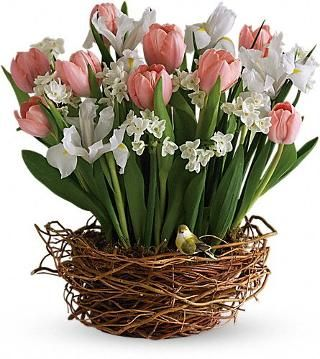 Tulip song flowers tulip song flower bouquet teleflora tulip song flowers cheer up chickadee heres a spring tastic way to brighten someones day a darling birds nest bursting with beautiful tulips mightylinksfo Images