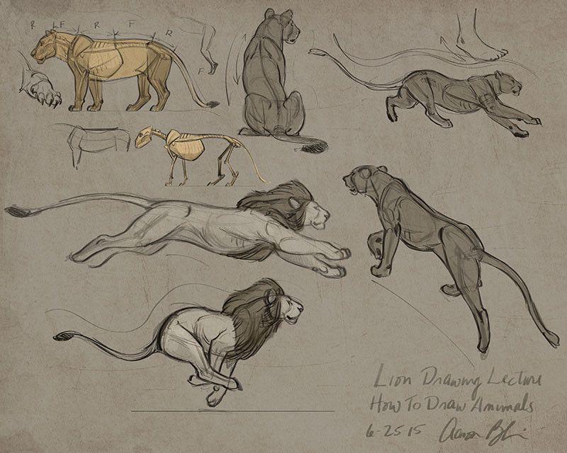 Anatoref Drawing Big Cats Pinteres