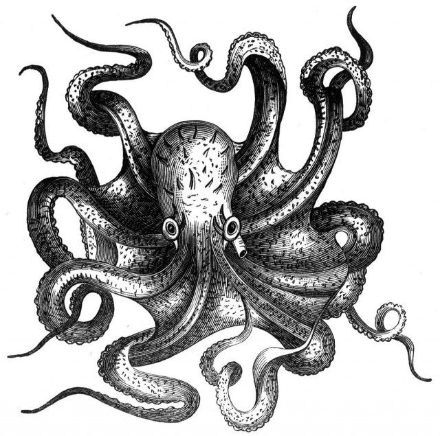 View source image | Emily | Octopus drawing, Octopus ...
