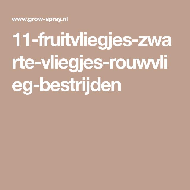 11-fruitvliegjes-zwarte-vliegjes-rouwvlieg-bestrijden | HH weetjes ...