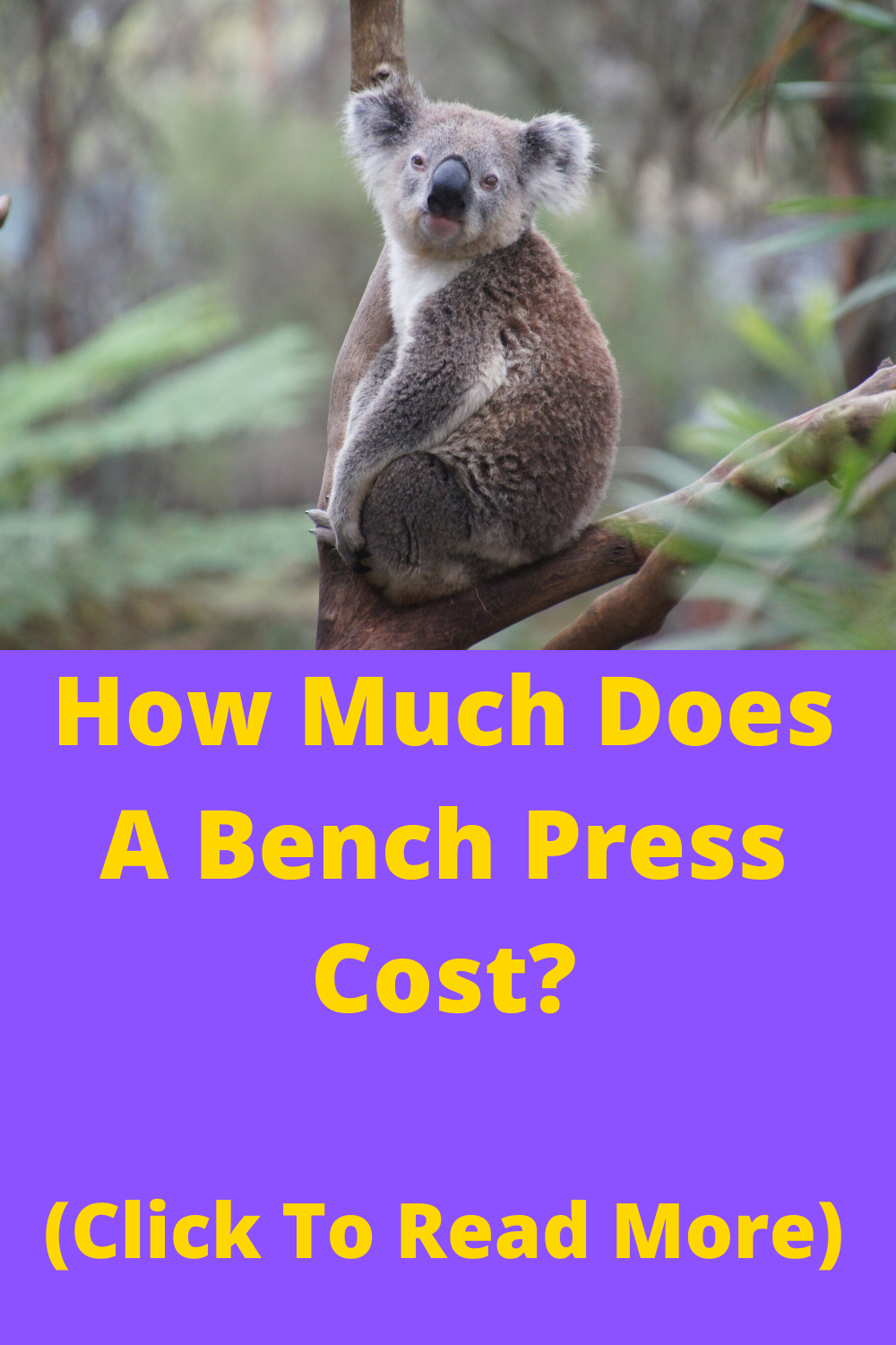 Bench Press Cost In 2020 Bench Press Weight Set Indoor Gym