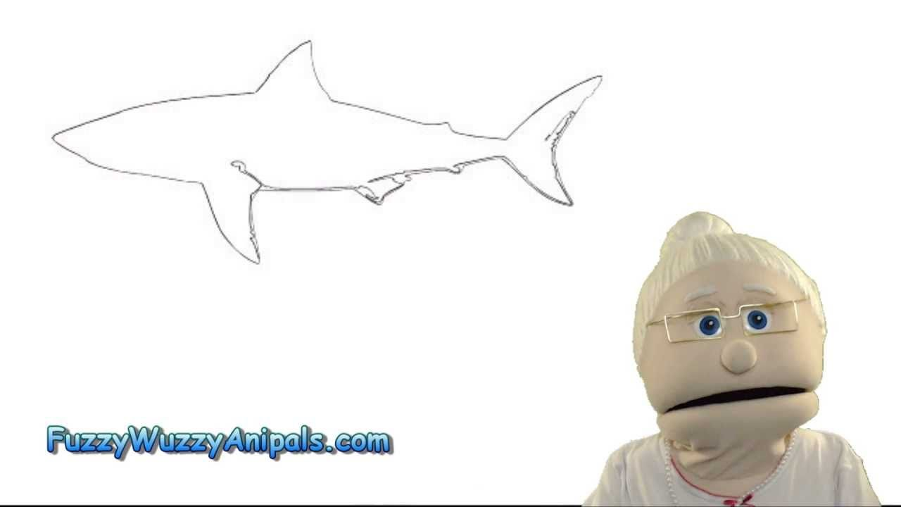 Do Great White Sharks Have Tastebuds? Animal Facts for ...