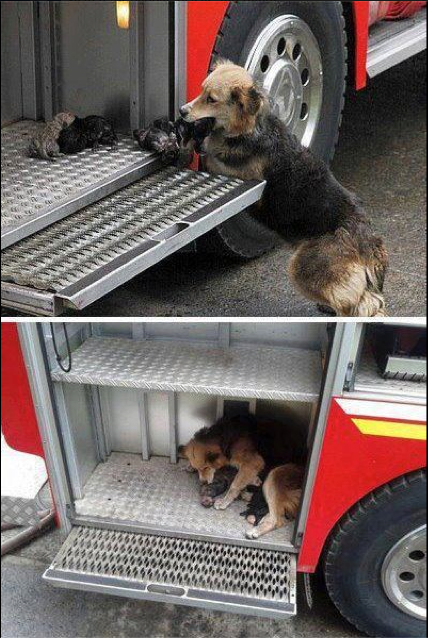 mum protecting her pups from house fire
