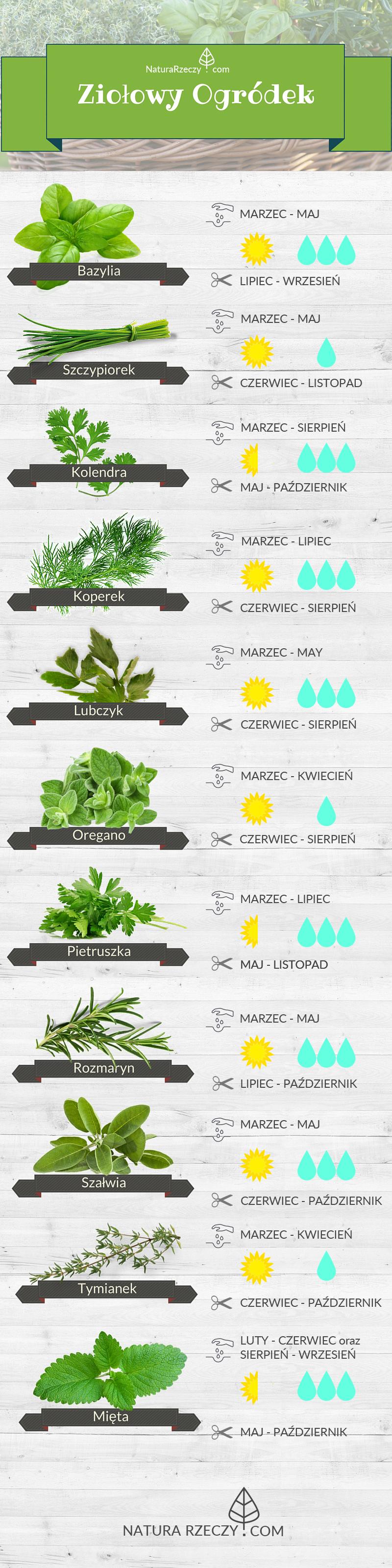 Ikonografika Ziolowy Ogrodek Growing Vegetables Magical Garden Vegetable Garden