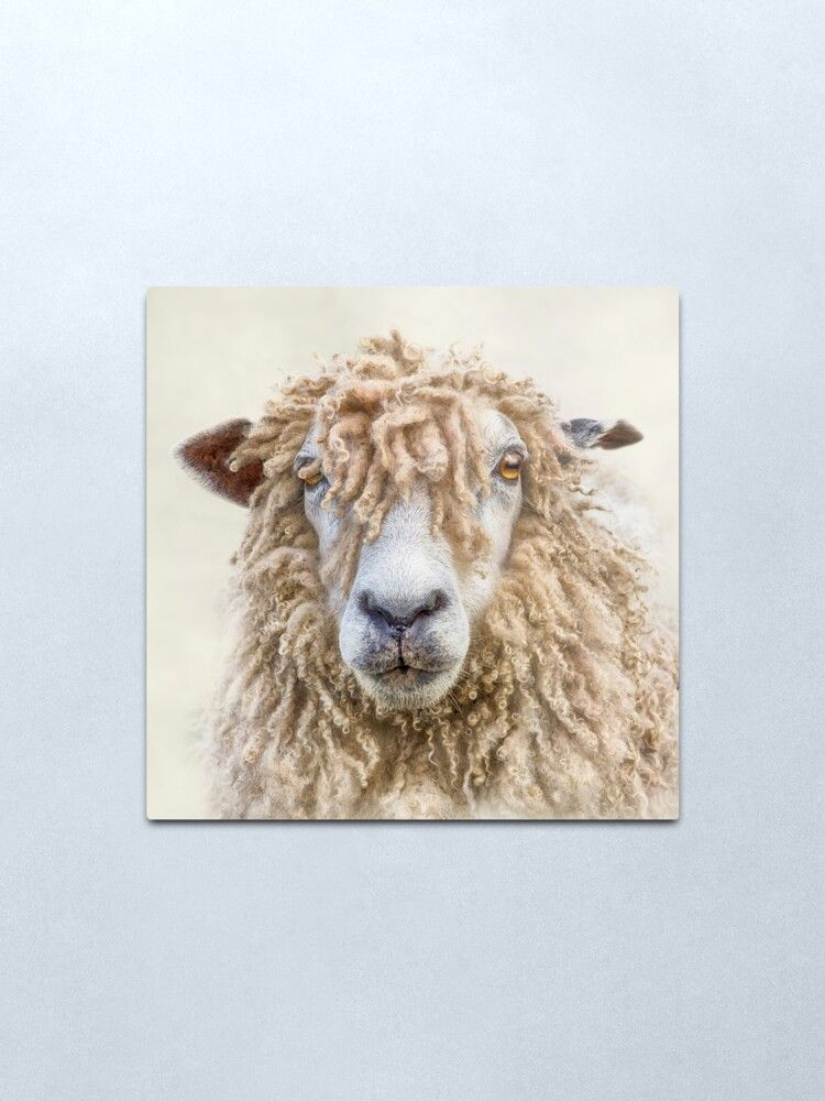 Leicester Longwool Sheep Metal Print By Linsey Williams Metal Art Prints Wall Art Wood Wall Art
