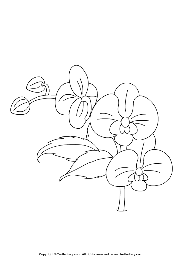 Orchid Coloring Sheet Coloring Sheets Coloring Pages Coloring Sheets For Kids